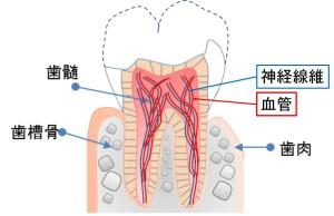 残根 歯周病専門医